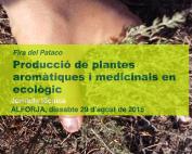 plantas-aromaticas-5